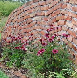 Sonnenhut, Echinacea purpurea 'Fatal Attraction' - Bild vergrößern